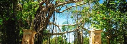 Ocho Rios, luscious Jamaica
