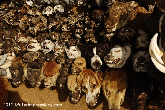 Cats´, dogs', monkey's and many more animals heads are sold at the market