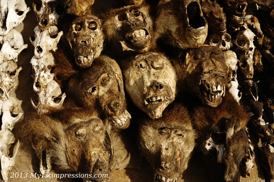 Monkeys heads. none of the animals looked like have had a peaceful death