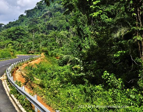 Rain forest wonder
