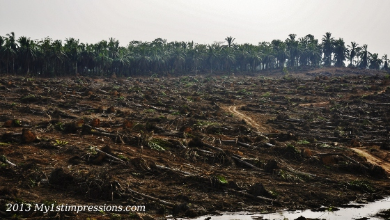 Deforestations seen on the way left us speechless