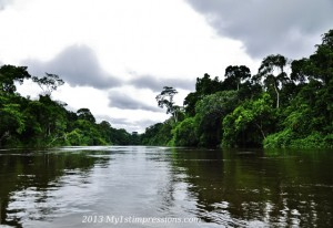 The rain forest surrounding the river