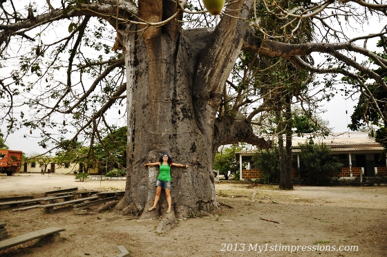 The baobab has become my favourite tree after this trip