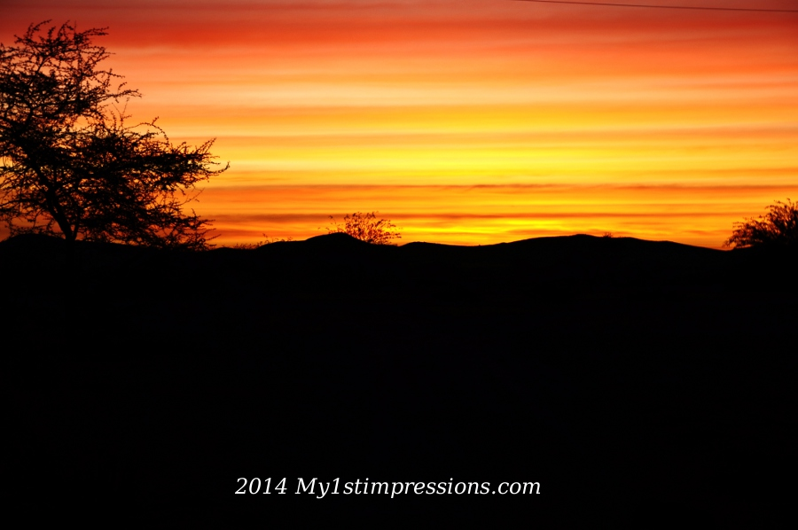 And a gorgeous sunset, the last amazing gift of the desert