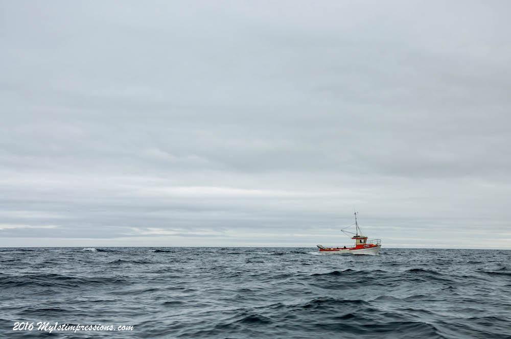 Greenland Inits, hunting seals