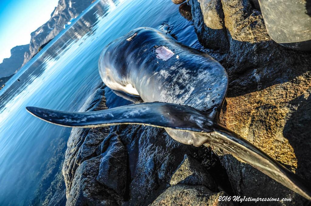 Kulusuk, greenland, inuits, Whale hunting