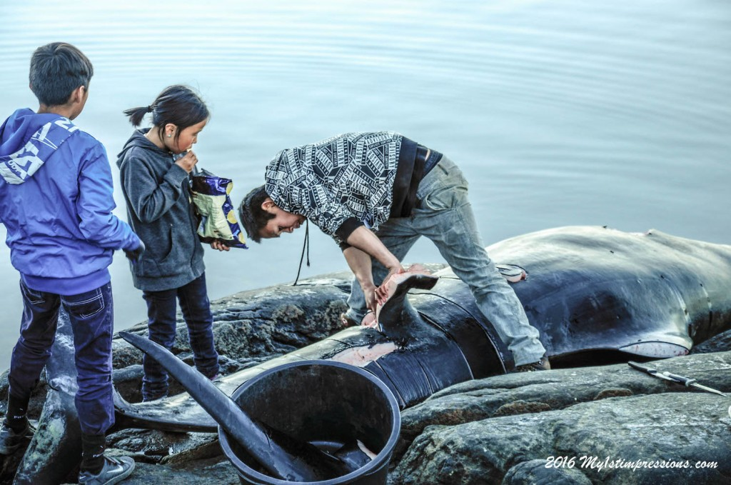 Whale meat, greenland, whales, kulusuk, Inuits,