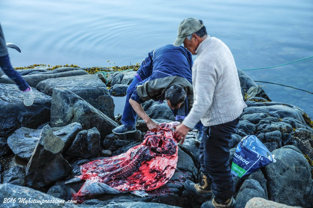 Seal, eating seal, seal meat, greenland, inuits