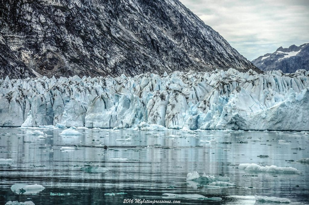 Glacier, greenland, seal
